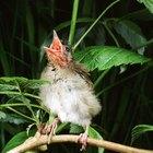 Como enterrar um pássaro morto