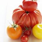 La altura promedio de una planta de tomates