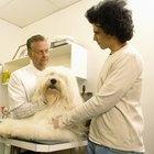 ¿Qué hace un asistente veterinario?