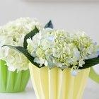¿Qué flores absorben más rápido el colorante para alimentos?