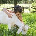 Ciencia fácil para niños sobre comportamiento de los animales