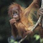 Formas de conservar animales y vida silvestre