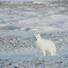 Quais as ameaças ambientais à tundra?