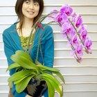 ¿Una orquídea puede volver a crecer si se rompe?