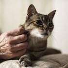 Effects of Neutering an Older Cat
