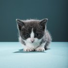 Can You Give Newborn Kittens Vitamin D Milk?