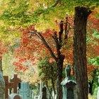 Como escrever um bom obituário: 10 passos fáceis