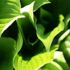 ¿Qué tipo de reacción es la fotosíntesis?