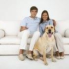 Como fazer fraldas reutilizáveis para cadelas