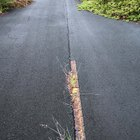 How to kill weeds growing through asphalt