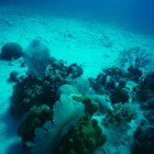 Qué tipos de organismos viven en rocas de agua salada