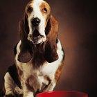 Com que frequência devo forçar meu cachorro doente a comer?