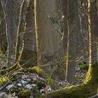 Sistemas de raíces del árbol de frutas