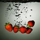 Cómo germinar fresas
