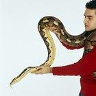 Cómo matar serpientes salvajes