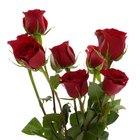 Por qué es la rosa un símbolo de amor