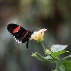 Lista de insectos con metamorfosis incompleta