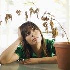 Cómo saber si tu planta ha muerto