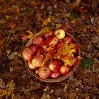 ¿Cómo mantenían y conservaban los alimentos en la época medieval?