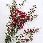 Plantas espinhosas com flores