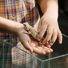 Actividades de zoología para niños