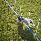 Clicker Method for Teaching Dogs to Do Weave Poles