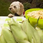 Is There a Dog Food Without Corn Meal?