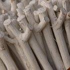Cómo preparar madera de avellana para hacer palos