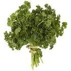 Fresh green, organic parsley on wooden table