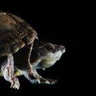 Lista de diferentes tipos de reptiles