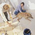 Como remover tinta de um cão