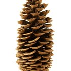 How to decorate with pine cones