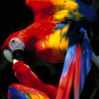 An Overview of the Life Expectancy of Pet Birds by Breed