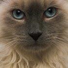 Cat Litter Recommendations