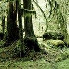 Como fazer um ecossistema de floresta tropical em uma caixa de sapatos