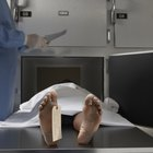 What Does a Mortuary Assistant Do?