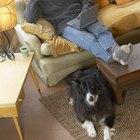 Como remover o cheiro de urina de cachorro de um sofá feito de camurça