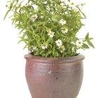 Cómo eliminar el moho de las plantas en macetas