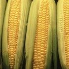 Como remover o cabelo de espigas de milho