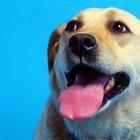 Dog Mounting Behavior