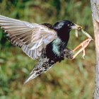 Bird feeders that keep starlings out