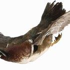 Como realizar os primeiros socorros de aves feridas