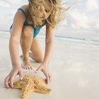 Como preservar uma estrela-do-mar