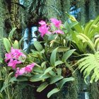 Orchids need good drainage to simulate their natural environment.