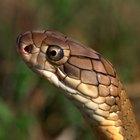 Maneras naturales de mantener a las serpientes alejadas de tu casa