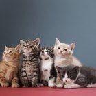 What Medication Treats Roundworm in Kittens & Cats?