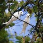 Repelentes caseiros para pássaros