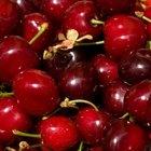 Cómo plantar y germinar carozos de cerezas