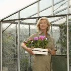 The disadvantages of polycarbonate greenhouses