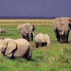 Classificação de organismos vivos nos seis reinos animais